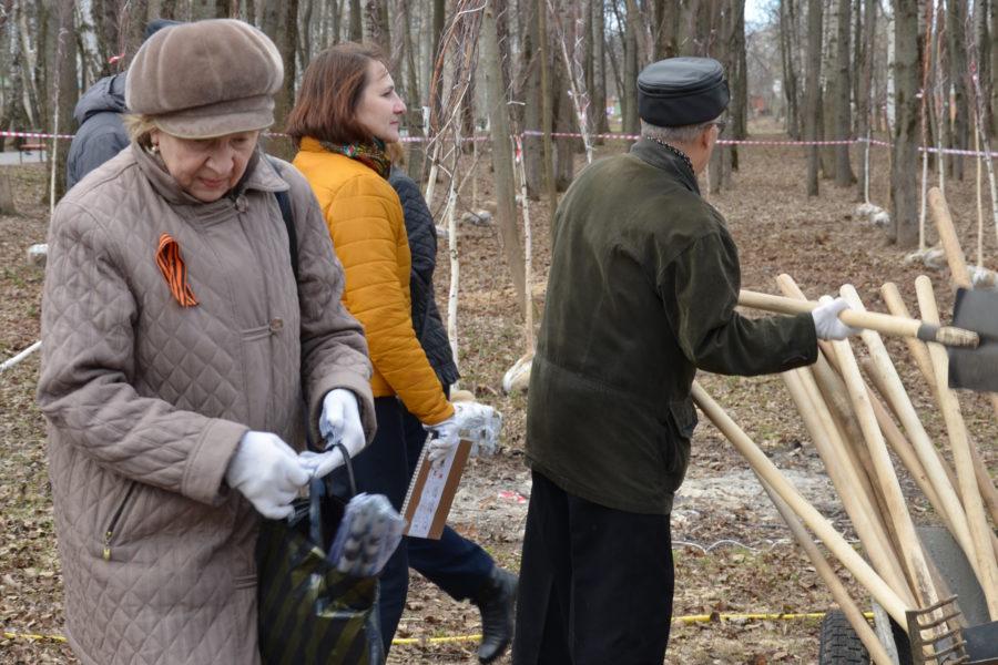 Березовая аллея в Комсомольском парке г. Тулы