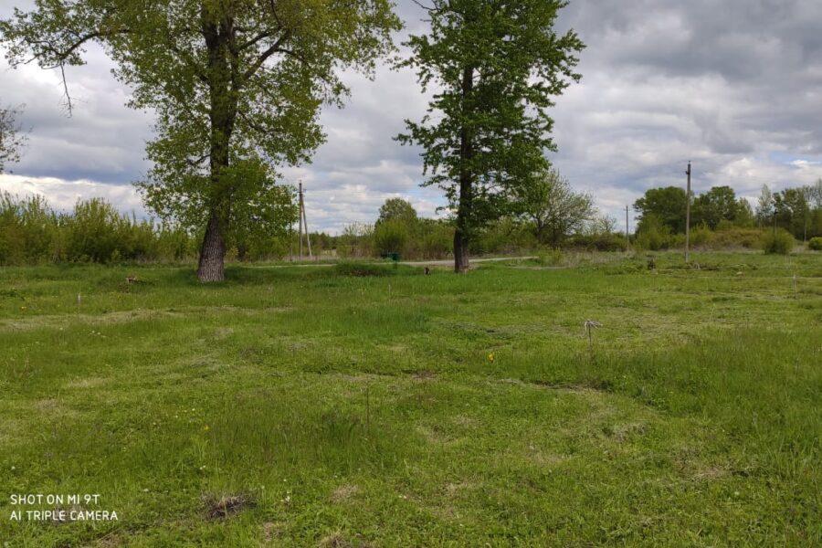 В поселке Степной Чернского района появится парк «Рябинушка»
